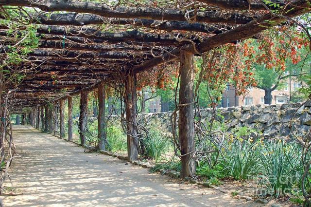 coker-arboretum-unc-chapel-hill-david-gellatly